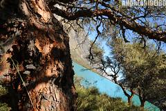 Vegetao nas alturas (ANDREA RIBEIRO Fotografias) Tags: parque peru azul alpes de agua do natureza ps beleza lagoa laguna arvore altura exotica vegetao cordilheira turquesa huascaran llanganuco peruvianimages