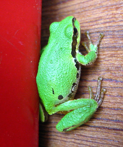frog-o-gram