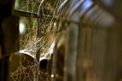 (nasos zovo) Tags: macro love canon fence dof close bokeh steel trap nasos fiar    canon40d   nasoszovo