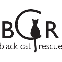 foster a black cat