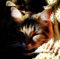 Mirrored Nick (mightyquinninwky) Tags: sunlight cute apt cat dof fuzzy bokeh kentucky nick lexingtonkentucky wicker onblack fontaineroad nearcampus fayettecountykentucky centralkentucky viewonblack thebluegrassstate solarpowercats