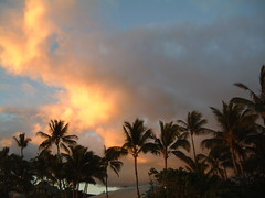 MAUI PALM TREES DURING SUNSET (SnapShotStar) Tags: ocean pink blue trees sunset sea summer sky orange tree beach clouds sailboat island hawaii scenery florida horizon maui palmtrees daytime keywest naturesbest kihei orangeskies nowthatssky thecloudappreciationsociety sunseaandsand 10millionphotos
