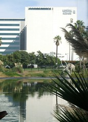 Leaving the Tar Pits (Travis S.) Tags: california trees building water pits museum la losangeles pond stuck east mammoth sinking tar labrea tarpits labreatarpits pagemuseum museumsquare georgecpagemuseum mammuthusimperator imperialmammoth
