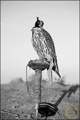 jyr 7r year 1955 (● Maitha ● Bint ●K●) Tags: aplusphoto