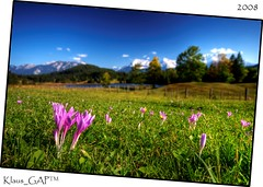 Lake Gerold: Crocuses in autumn (Klaus_GAP™ - taking a timeout) Tags: blue autumn trees sky mountain lake mountains fall fence germany geotagged bayern bavaria herbst meadow wiese himmel crocus blau garmischpartenkirchen krokus crocuses damncool krokusse fantasticflower abigfave platinumphoto anawesomeshot theunforgettablepictures geroldsee goldstaraward micarttttworldphotographyawards micartttt