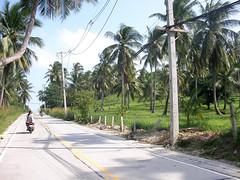 koh samui-coconuts road (soma-samui.com) Tags: travel thailand island asia resort samui chaweng koh         tourguidesoma soma