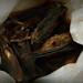 Ghana - Bag of Bats