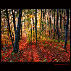 Autumn forest (MyOakForest) Tags: autumn red sun rot forest laub herbst wald herbstwald