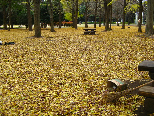 A carpet of golden leaves in Yoyogi Park