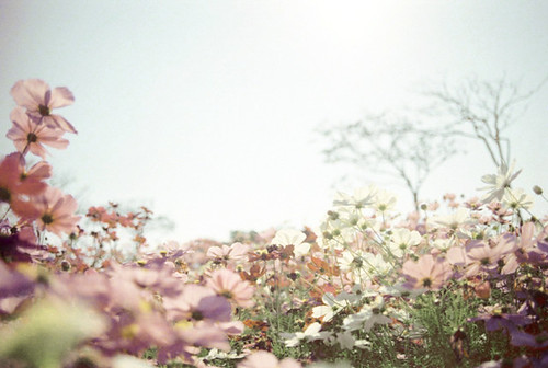 a/flower #3