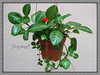 Episcia cupreata 'Frosty' (Flame Violet, Carpet Plant)