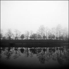 morning of river #13 (yein~) Tags: morning trees blackandwhite bw 120 6x6 tlr fog rolleiflex mediumformat river square landscape kodak 400tx squareformat 40fw