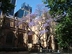 St Andrew's Jacaranda 1 (House of Hall) Tags: sydney standrews jacaranda