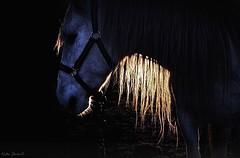 (EquusKath) Tags: galope