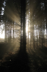 (Nektos) Tags: winter panorama brown white black forest denmark sunrays sunbeams nstved canondigitalixus70 vetorama