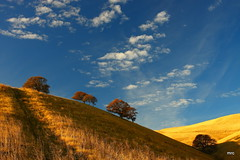 early morning light on the east bay hills (Marc Crumpler (Ilikethenight)) Tags: california morning trees usa clouds sunrise canon landscape hiking trails bayarea eastbay antioch soe blackdiamond ebrpd contracostacounty eastbayregionalparkdistrict tamron1750 sfchronicle96hours 40d ebparks canon40d vosplusbellesphotos paolivornosfriends visiongroup100 visionqualitygroup ebparksok