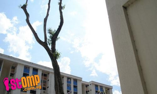 No point having trees in carpark if they are 'botak'