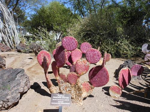 Purple Cactus!