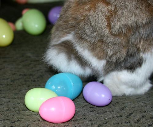 Rabbit Laying Eggs