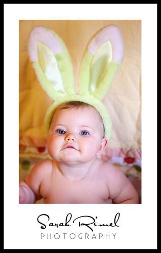 web bunny 01