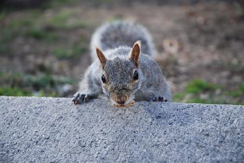 squirl at union square