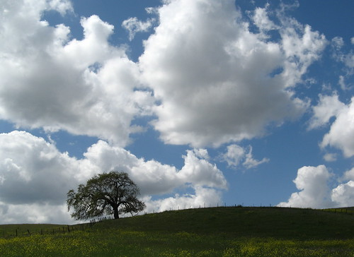 Oak and clouds