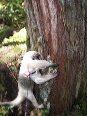 Checking out a tree