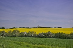 Worcestershire (Nala Rewop) Tags: blue trees sky green field yellow golden woods explore fields rapeseed