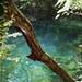 白神山地:沸壷の池
