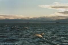 41 Seelandschaften1 (6) (divertom68) Tags: analog europa europe fuji sonnenuntergang scan abenddämmerung gescannt kleinbildkamera papierfoto deutschlandgermanymarinenavywilhelmshavenwhvwehrpflichtzeitsoldatberufssoldatseefahrtauslandsreisehafenheimathafenzerstörergeschwader101101ahamburgklassezerstörerdestroyerhessend184dämmerung divertom68