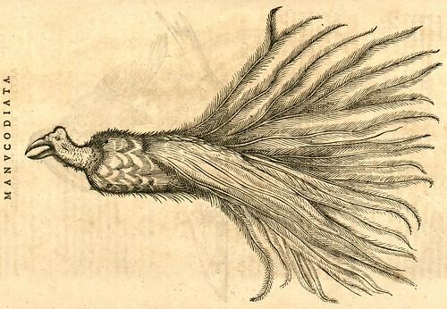 Manucodiata - Nieremberg (SICD) 1635