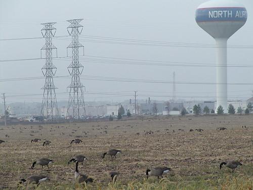 geese10-13-05northaurora