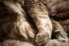 Cat Nap (jojobeanz) Tags: sleeping pets cute delete10 cat delete9 delete5 delete2 delete6 delete7 save3 delete8 delete3 delete delete4 save save2 save4 katt