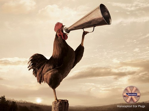 Funny commercial ad showing a rooster