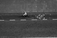everywhere bicycle lanes (Sebastian Marko) Tags: bicycle rotterdam lane cycler sebastianmarko