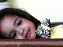 Borbozebra 2 (Wladimir Calado) Tags: insectos butterfly insect insects borboleta insetos naturewatcher llovemypic