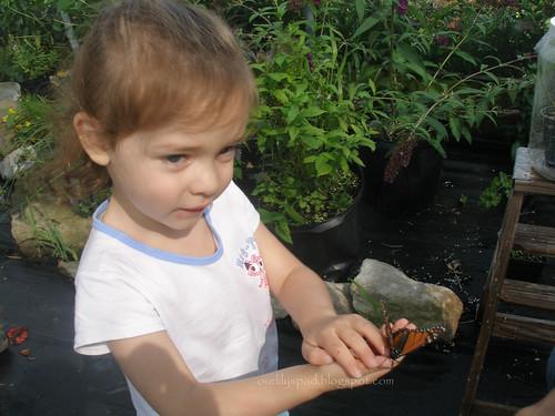 2 butterflies 066