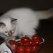 Remco's kitten 8