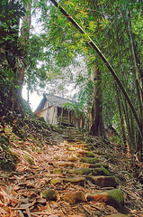 Baduy forest (Tempo Dulu) Tags: forest java westjava tribe baduy hdr badui suku banten baduytribe