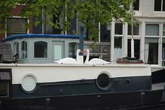 DSC_9613 (1 2 3 4) Tags: amsterdam grachten hausboot sommer08