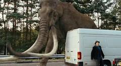 mamut de Columbia