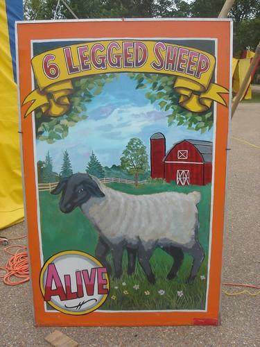 6 legged sheep by