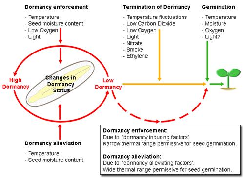 Dormancy Factors