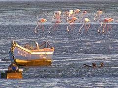 Flamingos.... (by Loca....)