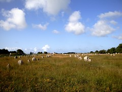 Rows in the field (Miss Laid Plot) Tags: old france megalithic mystery ancient standingstones brittany bretagne menhirs mysterious prehistoric alignment standingstone carnac prehistory menhir prehistoricsite alignments megalithicsites megalithicsite stonerows prehistoricsites