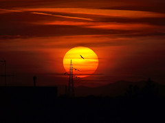 Sun = Energy (steve_steady64) Tags: sunset red italy orange sun color bird sol clouds soleil fly energy tramonto nuvole sonnenuntergang volo  sole sonne  oiseau vogel ravenna pjaro puestadelsol cervia coucherdusoleil        aplusphoto