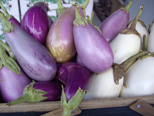 Eggplant from Wayward Seed Farm