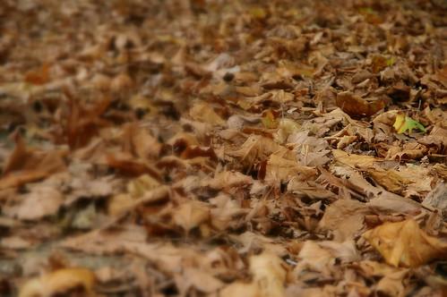 蘇鎮公園 21 - 秋天到了