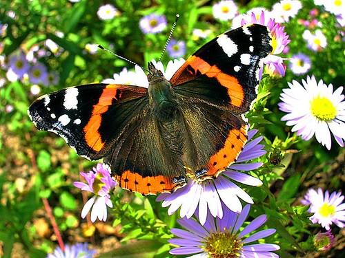 butterflies facts, Beutiful Butterfly, Butterfly Picture, Best Butterfly