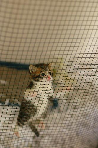 Kitten climbing cage